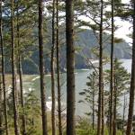 """Through the Firs, Heceta Head"" by photorina"