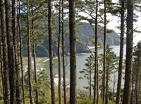 Through the Firs, Heceta Head