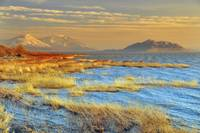 utah lake blue water yellow reeds