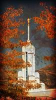 Mount timpanogos temple framed in yellow leaves te