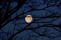 Daylight moon 2-1-10 001-1
