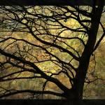 """""""still life"""" by LouMcGill"""