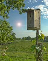 Bird House with a Flare