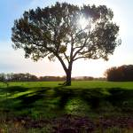 """""""Tree in the morning"""" by andy-coleman"""