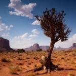 """tree growing up in monument valley, arizona"" by mariossavva"