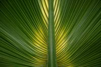 Palm Leaf Symmetry