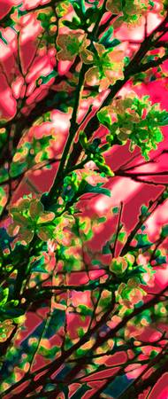 Cherry Blossoms 0188 Green Edit