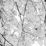 """""""leavesphotocopy"""" by Sparkimarki"""