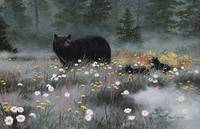 Springtime Black Bear