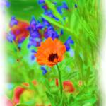 """""""BACK YARD FLOWERS"""" by pjaysart"""