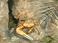 Fiddler Crab and Driftwood
