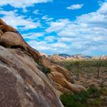 """Joshua Tree-5"" by InFocusPhotography"