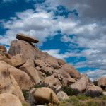 """Joshua Tree-10"" by InFocusPhotography"
