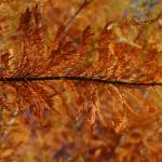 """""""Beautiful Fall Color"""" by ctoby5"""