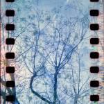 """""""Blossoms"""" by istillshootfilm"""