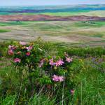 """309 PALOUSE 16 STEPTOE BUTTE"" by KEITHMOUL"