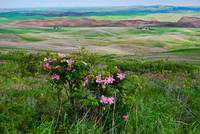 309 PALOUSE 16 STEPTOE BUTTE