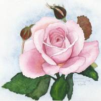A Rose For Aunt Lorraine Art Prints & Posters by Kathleen Worthington