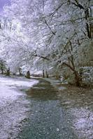 Infrared Mountain Trail