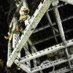 """Birdhouse Observation"" by DucklingDoodle"