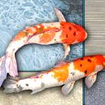 """Pair of Sanke Koi on Multi Textured Background"" by ElainePlesser"