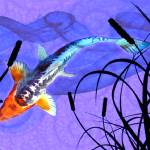 """Shusui Koi in Swirling Water and Cattail Shadows"" by ElainePlesser"