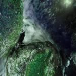 """""""teardrop"""" by DucklingDoodle"""