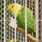 """Cage Bird"" by RobbArt"