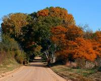 Autumn Country Lane