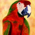"""""""Parrot"""" by vigliotti"""