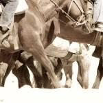 """""""Horses"""" by kreicher"""
