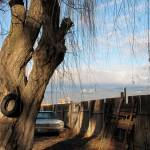 """Tire and Tree"" by makepeace"