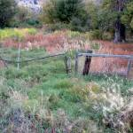 """Vegetation & Fence"" by makepeace"