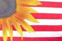 Sunflower Flag