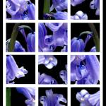 """""""Bluebells Mix"""" by andy-coleman"""