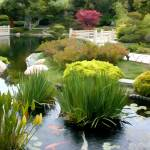 """Japanese Garden Pond with Koi"" by ElainePlesser"