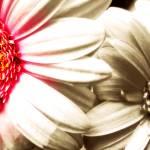 """""""Flower Spotlight"""" by cupoftea"""