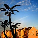 """Metallic palm condo sunset"" by capemayX"