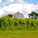 """Old Barn on Keuka Lake"" by w3ihy"