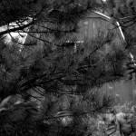 """Hidden"" by NoreenBerman"