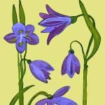 """""""Flower 4"""" by kostliva"""