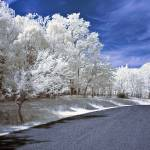 """Infrared Road"" by photocatphoto"