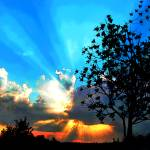 """Sunburst Behind Clouds with Tree Silhouette"" by ElainePlesser"