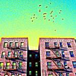 """Birds over Inwood"" by iwasoutwalking"
