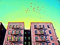 Birds over Inwood