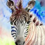 """Zebra of Color"" by lesliehoopswallace"