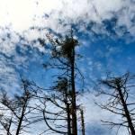 """Mountain Tree Tops"" by jaycophoto"