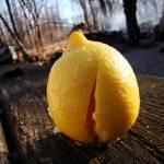 """Lemon"" by fivehourdelay"