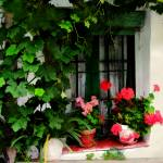 """Grapevines and Geraniums Around a Window"" by ElainePlesser"