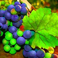Harvest Grapes Art Prints & Posters by Elaine Plesser
